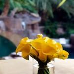 callas amarelas - mini casamento curitiba - decoração de casamento Curitiba